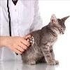 Ветеринарные клиники в Чапаеве